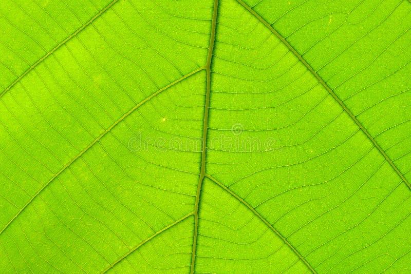 Структура предпосылки лист естественной стоковое фото rf