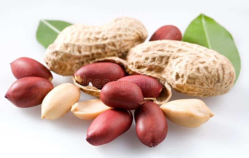 стручки арахиса стоковые изображения