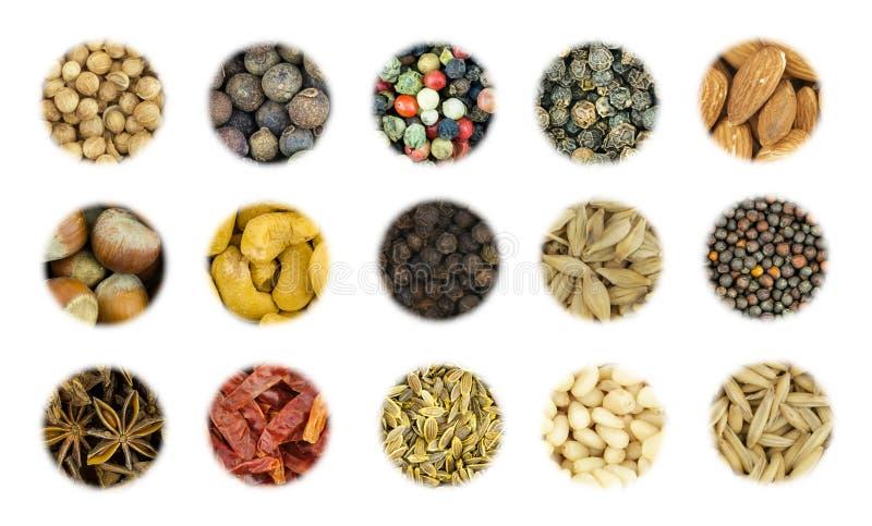 Стручок горячего chili специи основания установленные низкопробные аддитивные и комплект перцев, гаек анакардии и фундука стоковая фотография rf