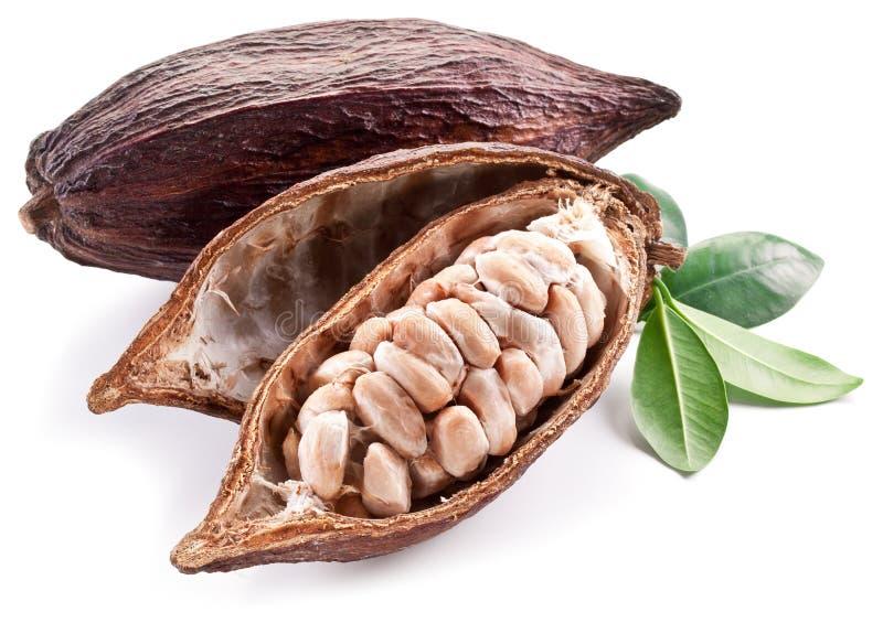 Стручок какао стоковые фотографии rf