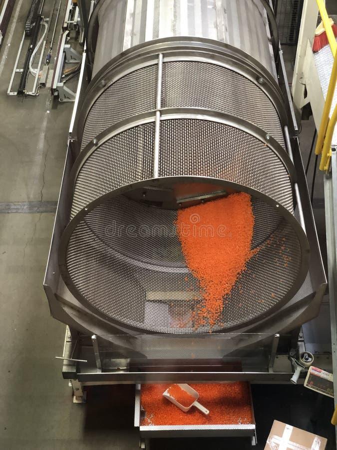студень фасолей цветастый стоковое изображение rf