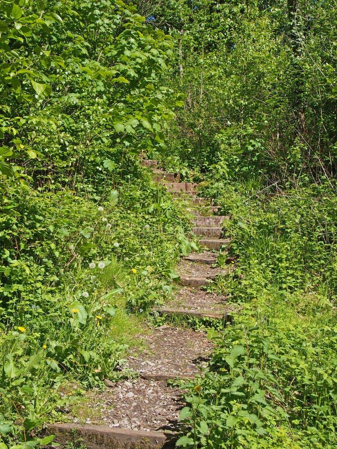 ступеньки на изогнутой узкой тропинке, окруженной ярко-зелёной солнцеосвещенной растительностью, ведущей в густые леса стоковые изображения rf