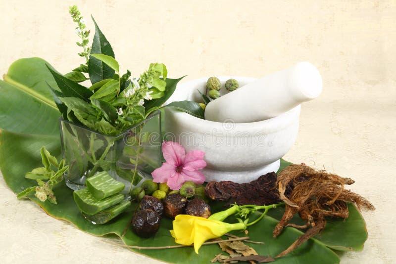 Ступка и пестик с травами стоковое изображение