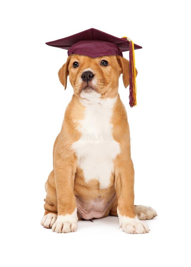 Студент-выпускник школы повиновению щенка стоковые изображения rf