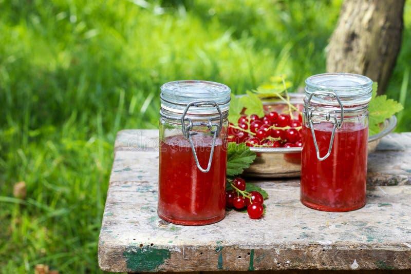 Студень красной смородины в сохранять стекло стоковая фотография
