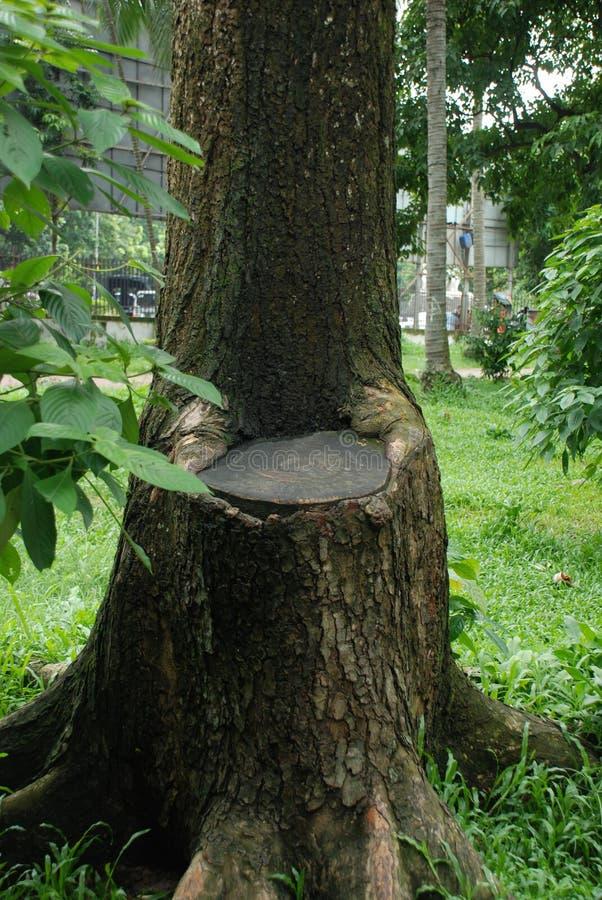 Стул дерева стоковая фотография rf