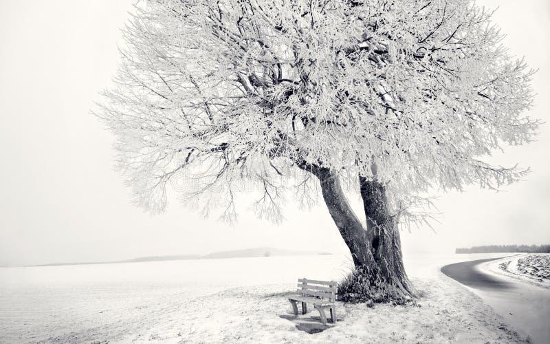 Стул дня дерева зимы белый стоковые изображения rf