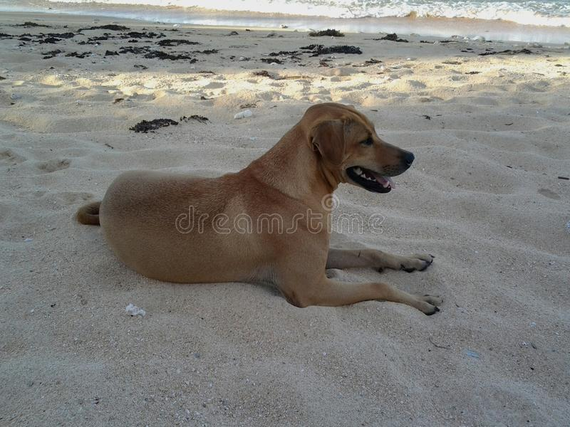 Стэнли на песке стоковое фото rf