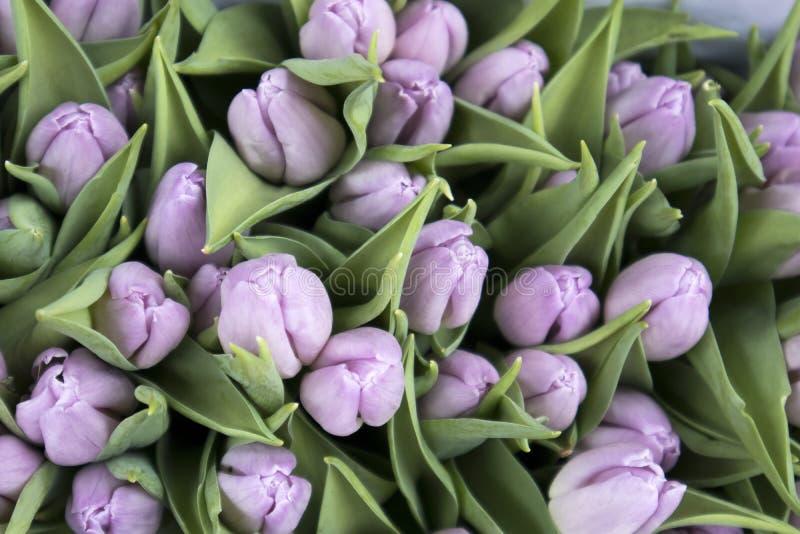 Сувениры на Bloemenmarkt - плавая рынке цветка на канале Singel Амстердам Нидерланды стоковая фотография rf