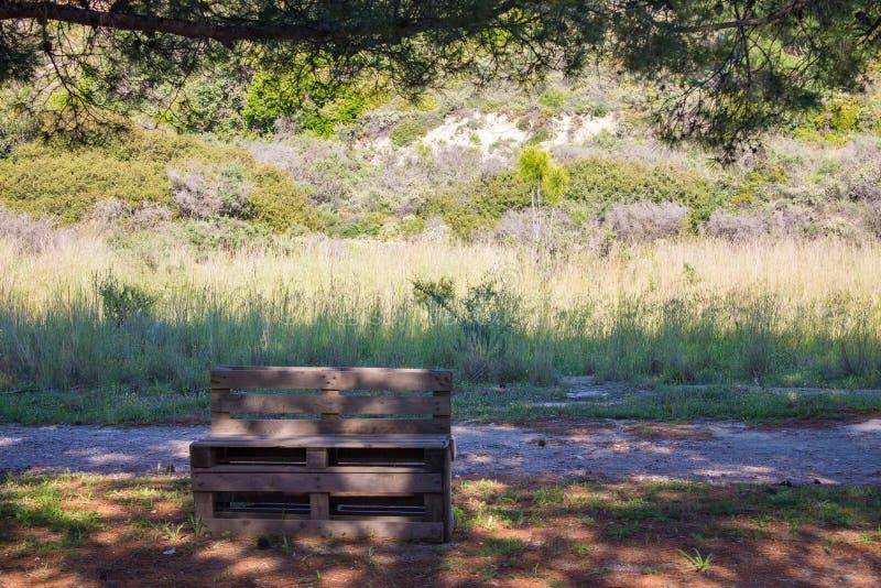 Суд деревянных паллетов в природе около дороги и сосен стоковые изображения