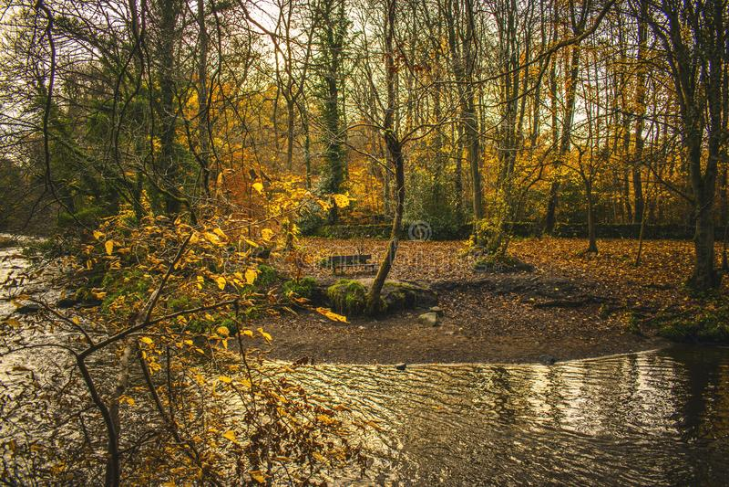 Суд около реки в melancholic падения ландшафта осени стоковые изображения rf