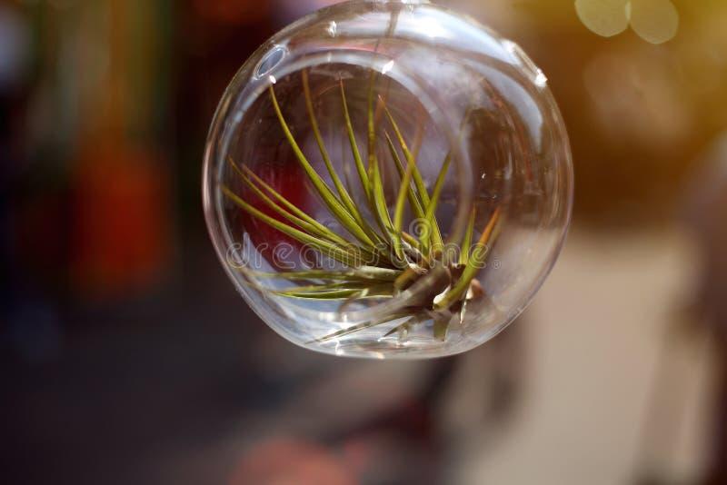 Суккулентный расти в стекловарном горшке Изображение сделало на открытом воздухе в солнечном дне стоковое изображение