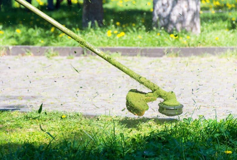 Сумасшедшее вырезывание травы в парке стоковое изображение rf