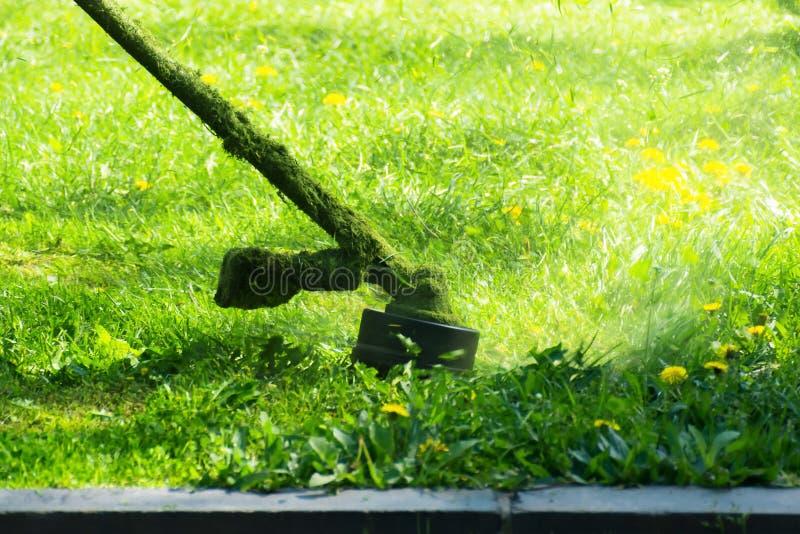 Сумасшедшее вырезывание травы в парке стоковые изображения