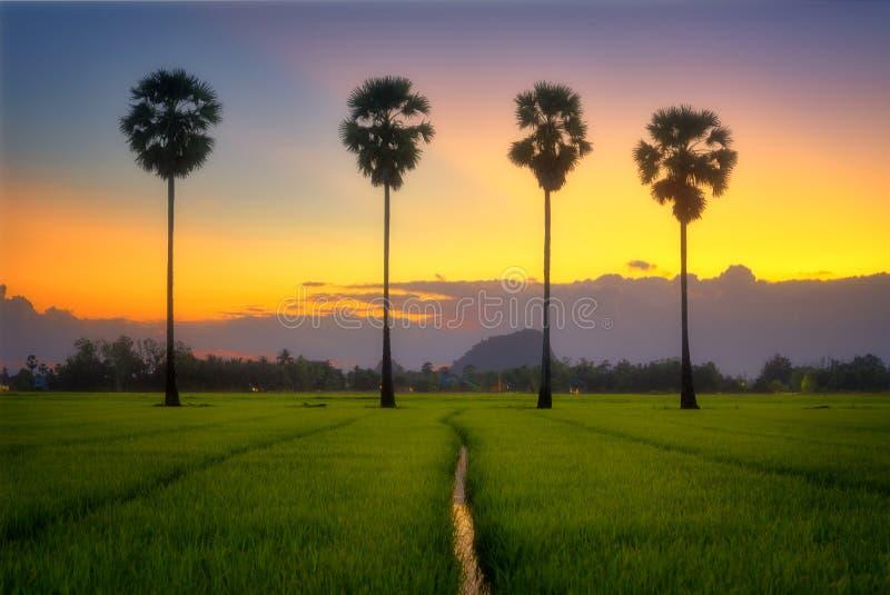 Сумерки после захода солнца в поле и пальме стоковое фото