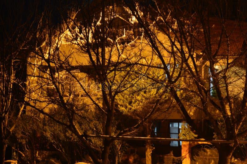 Сумерк в лесе, страшные деревья, мистическая темная предпосылка хеллоуина grunge стоковая фотография rf