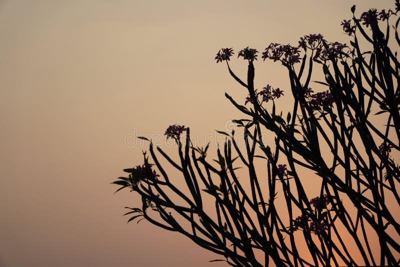 Сумерк Заход солнца до неба не будет красн с тенью дерева стоковая фотография