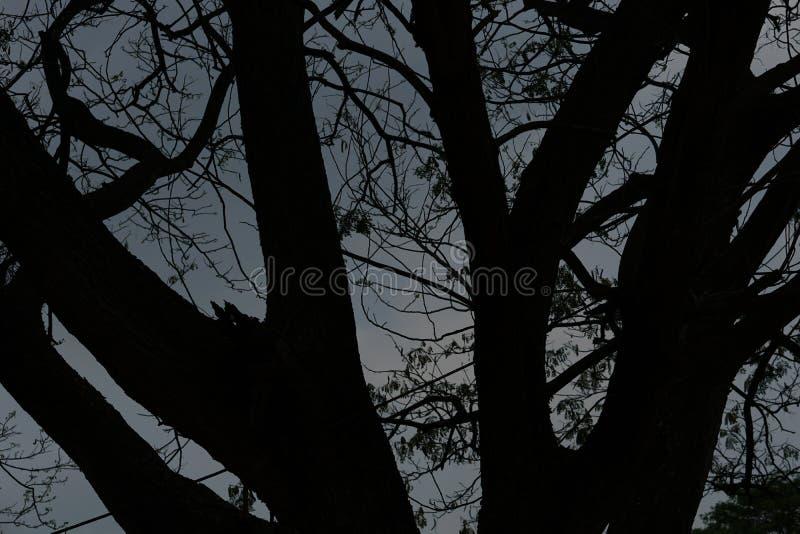 Сумерк Заход солнца до неба не будет темн с тенью дерева стоковые изображения rf