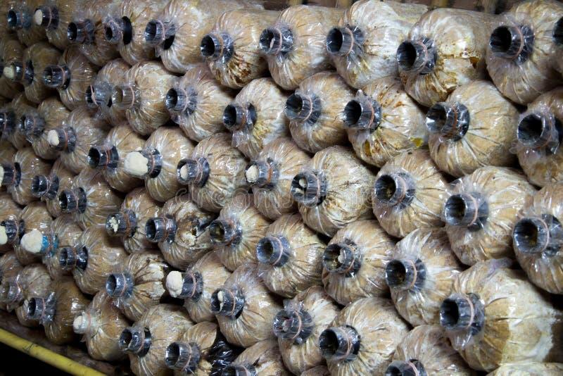 Сумка гриба культивирования в ферме стоковая фотография