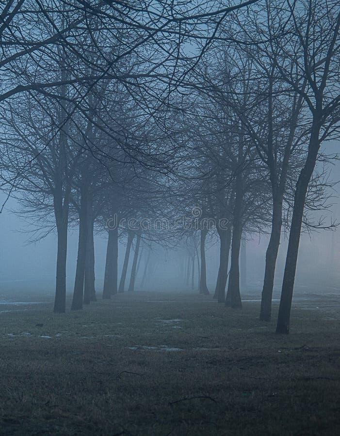 сумрак Переулок потерянный в сильном тумане стоковые изображения rf