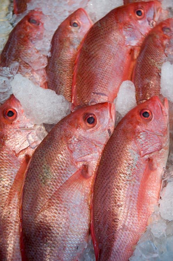 супермаркет рыб стоковое изображение