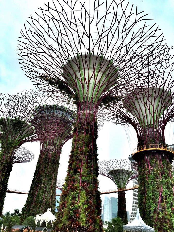 Супер дерево стоковые фотографии rf