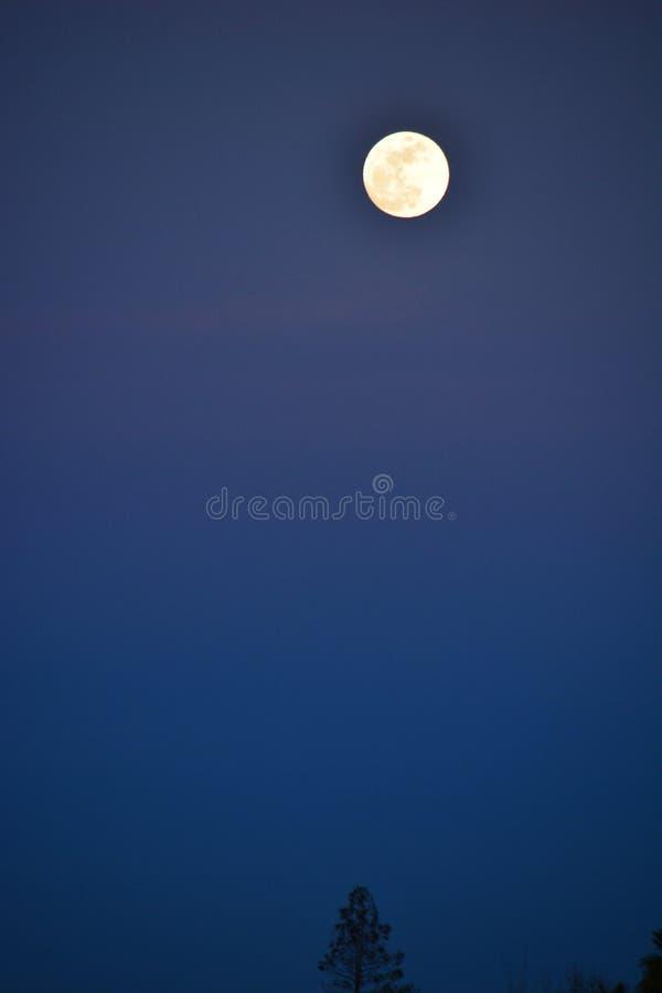 Супер луна на заходе солнца до затмения луны крови стоковые изображения rf