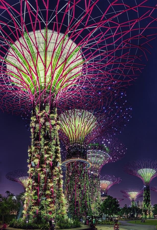 Супер сцена ночи деревьев на садах Сингапура заливом стоковое изображение