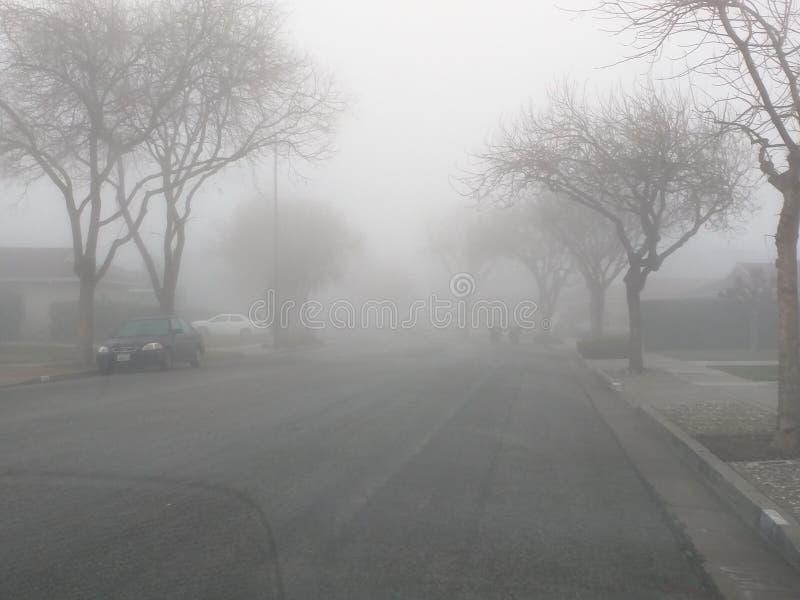 Супер туманное утро! стоковые фотографии rf