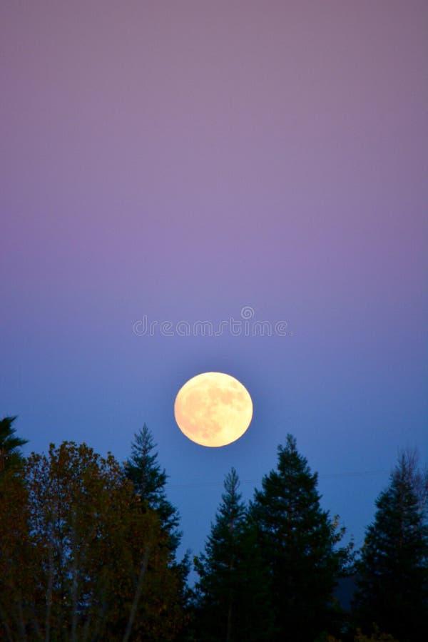 Супер луна над деревьями с розовым фиолетовым небом стоковое фото rf