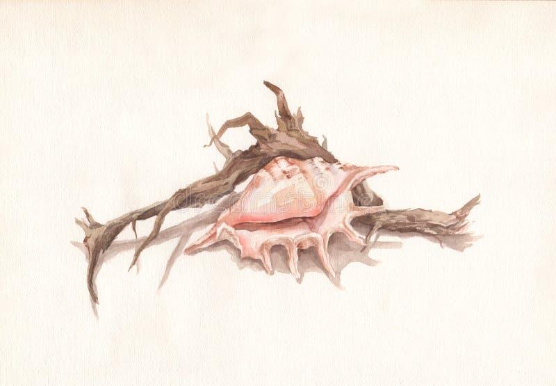 сухая акварель раковины корня картины иллюстрация штока