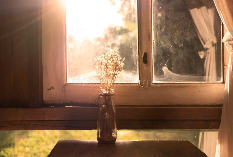 Сухая ваза цветка на деревянном столе около окна в комнате с солнечным светом в вечере белизна осени изолированная принципиальной стоковая фотография rf