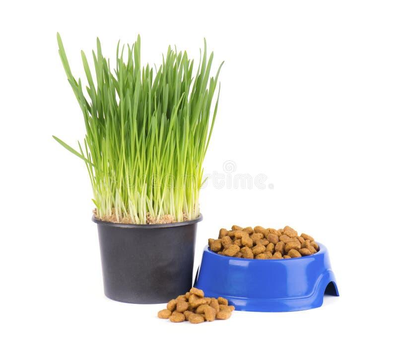 Сухая кошачья еда в голубом шаре Свежая трава для котов белизна изолированная предпосылкой стоковые изображения rf