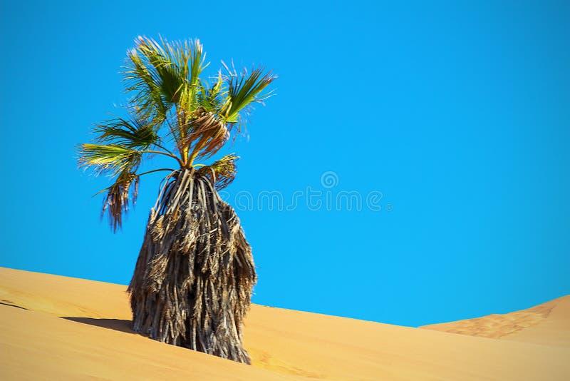 Сухая ладонь в песчанной дюне Пустыня Namib стоковое изображение rf