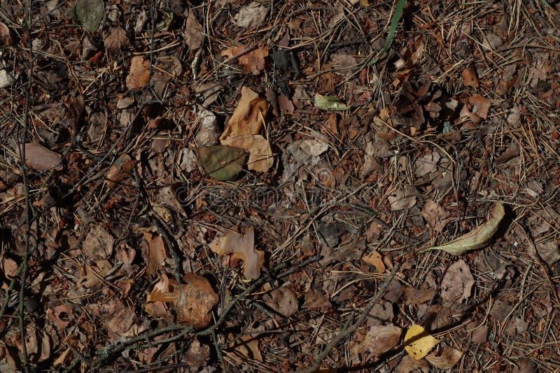 Сухая предпосылка лист листья естественной предпосылки сухие на том основании Сухие листья осени оранжевые и коричневые цвета : ( стоковое изображение