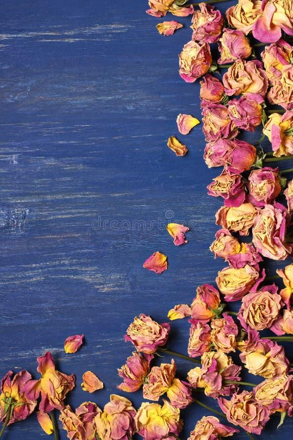Сухая предпосылка роз стоковое изображение rf