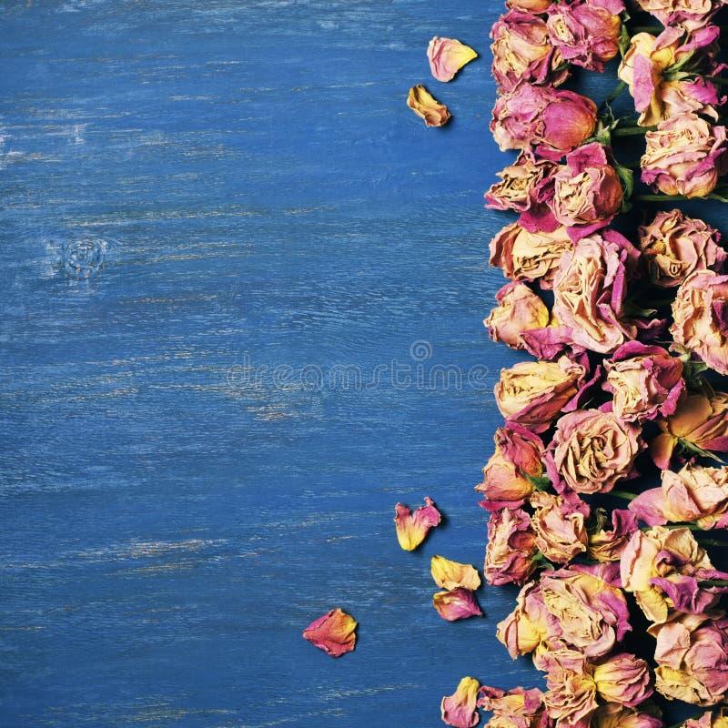 Сухая предпосылка роз стоковые фото