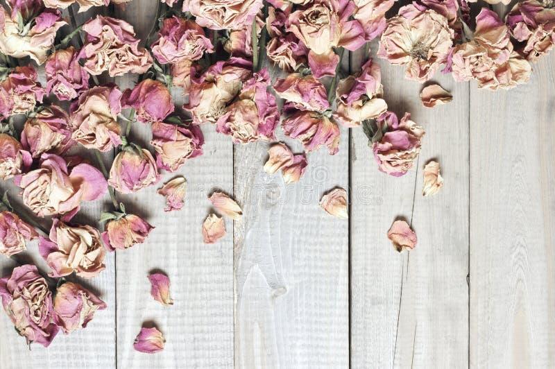 Сухая предпосылка роз стоковые изображения rf