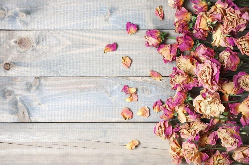 Сухая предпосылка роз стоковые фотографии rf