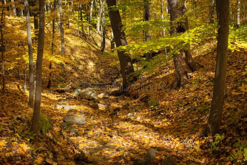 Сухая скалистая кровать потока с листьями падения стоковое изображение rf