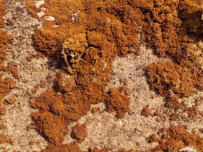 Сухая текстура мха стоковое фото