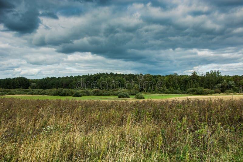 Сухая трава в луге, зеленом лесе и темных дождливых облаках стоковое фото
