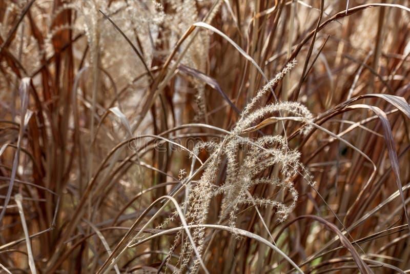 Сухая трава на летний день стоковая фотография rf