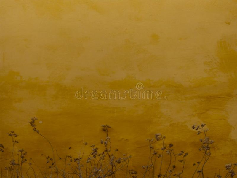 Сухая трава покидает дно старого желтого пола стоковая фотография