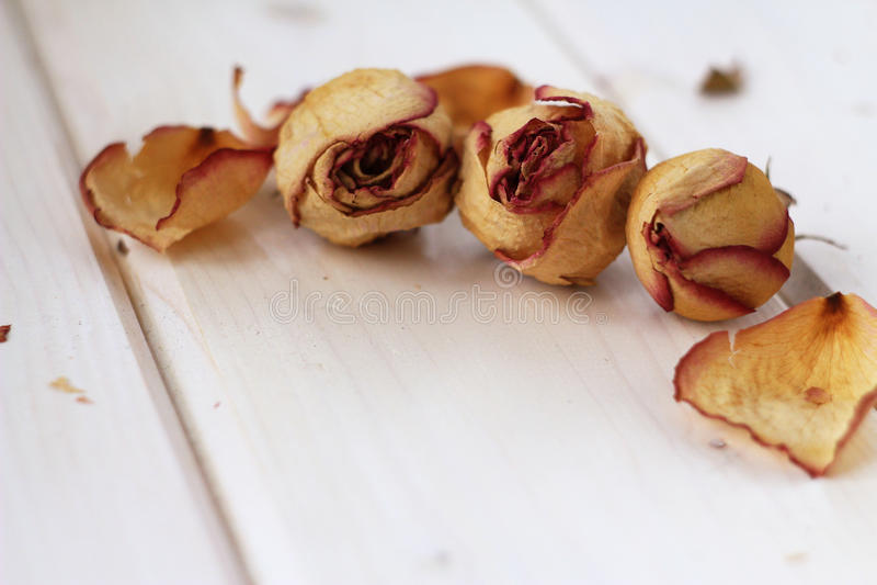 сухие бутоны и лепестки розы стоковые изображения rf