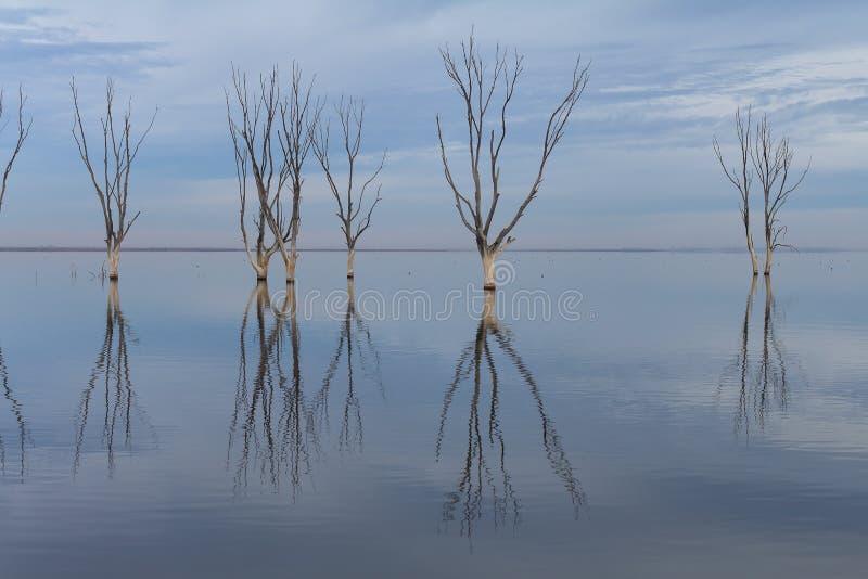 Сухие деревья погруженные в воду в озере стоковые изображения
