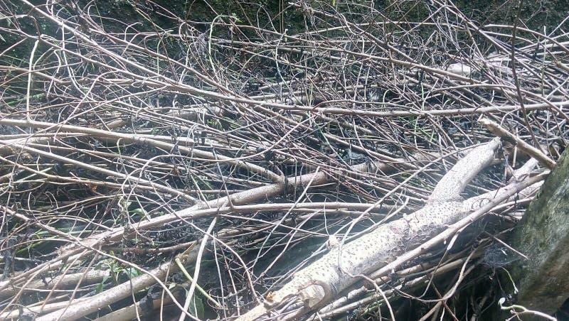 Сухие деревянные хворостины в задворк стоковое изображение rf