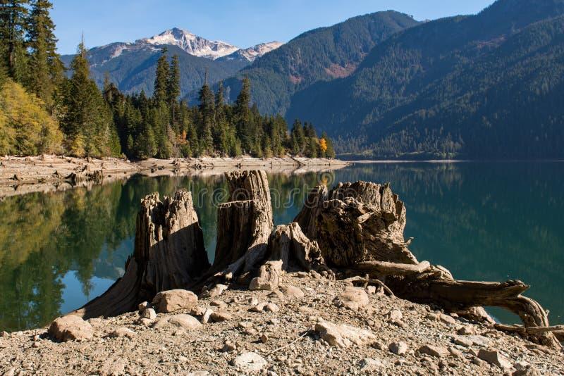 Сухие журналы и пни дерева на сухом береге озера хлебопек в северных каскадах стоковые изображения