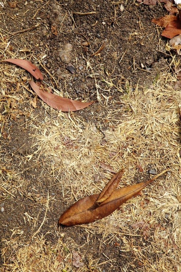 Download Сухие лист и сухая трава стоковое изображение. изображение насчитывающей конспектов - 40588375