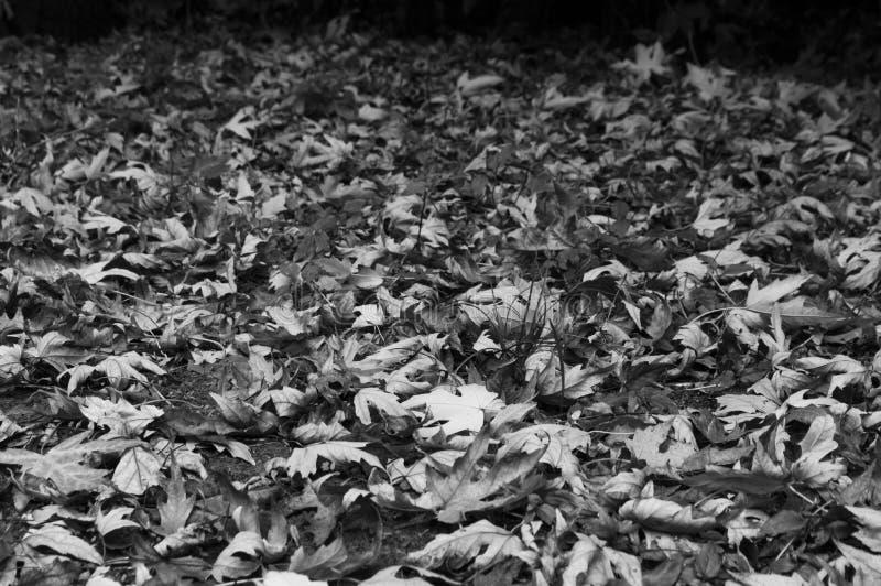 Сухие листья в осени дают уникальный ландшафт стоковое фото rf